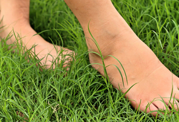 piedi erba
